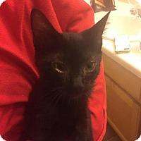 Adopt A Pet :: Aladdin - Glendale, AZ