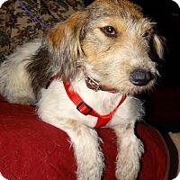 Adopt A Pet :: Delta - Tacoma, WA