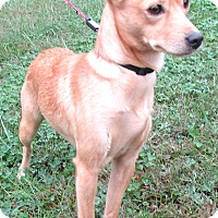 Adopt A Pet :: Lillith - Reeds Spring, MO