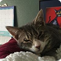 Adopt A Pet :: Buster - Oxnard, CA