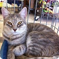 Adopt A Pet :: Simora M - Sacramento, CA