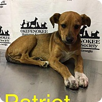 Collie Puppy for adoption in Waycross, Georgia - Patriot
