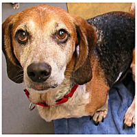 Adopt A Pet :: Lucky - Forked River, NJ