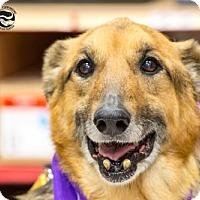 Adopt A Pet :: Eric *CAT FRIENDLY* - Clarkston, MI