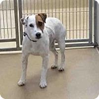 Adopt A Pet :: Wishbone - San Francisco, CA
