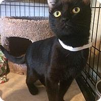 Adopt A Pet :: Pebbles - Freeport, NY