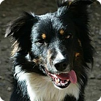 Adopt A Pet :: Mungo - Bellevue, NE