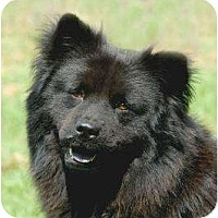 Adopt A Pet :: Mimi *Foster* - Glen Allen, VA
