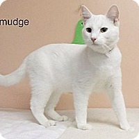 Adopt A Pet :: Smidge - Anderson, IN