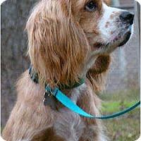 Adopt A Pet :: Tiny Tim - Sugarland, TX