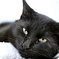 Adopt A Pet :: Joe Panther - Chicago, IL