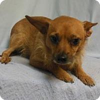Adopt A Pet :: Peanut - Gary, IN