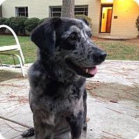 Adopt A Pet :: Fefe Grace - Richmond, VA