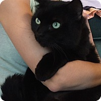 Adopt A Pet :: Ozzie Pawsborne - San Antonio, TX