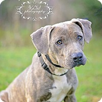 Adopt A Pet :: Sweetheart - Fort Valley, GA