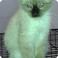 Adopt A Pet :: Chloe - Whittier, CA
