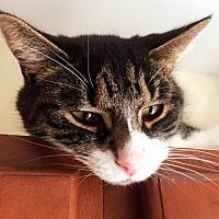 Adopt A Pet :: Adam - Huguenot, NY