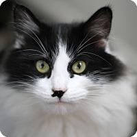 Adopt A Pet :: Princess Sophia - Yorba Linda, CA