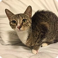Adopt A Pet :: Tiger Lilly - Honolulu, HI