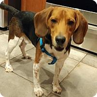 Adopt A Pet :: Max VIII - Tampa, FL