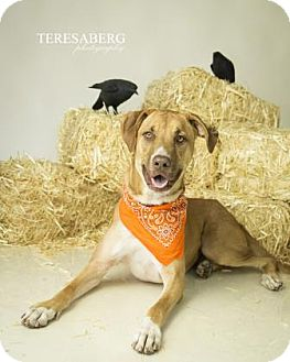Hound (Unknown Type) Mix Dog for adoption in Dallas, Texas - Jake