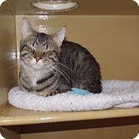 Adopt A Pet :: Molasses *Petsmart GB* - Appleton, WI