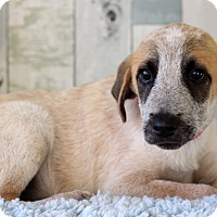 Adopt A Pet :: Jackie - Waldorf, MD
