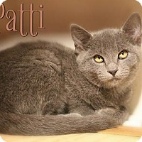 Adopt A Pet :: Patti - Benton, LA