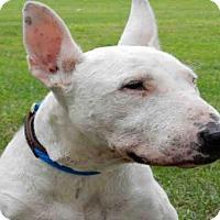 Adopt A Pet :: HOMER - Upland, CA