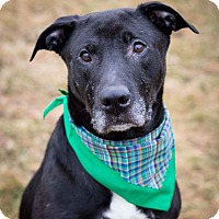 Adopt A Pet :: Bowie - Frankfort, IL