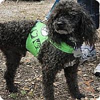Adopt A Pet :: Izod - Arcadia, FL