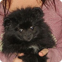 Adopt A Pet :: Evan - Greenville, RI