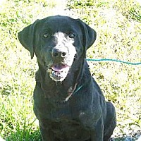 Adopt A Pet :: # 253-12 Adopted! - Zanesville, OH