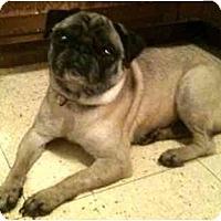 Adopt A Pet :: Rosie-NY - Mays Landing, NJ