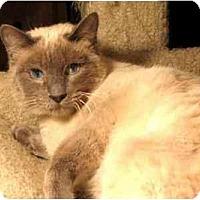 Adopt A Pet :: Ivana - Davis, CA