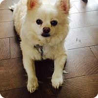 Adopt A Pet :: Bear - San Francisco, CA