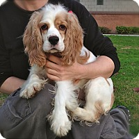 Adopt A Pet :: CHARLOTTE - Toluca Lake, CA