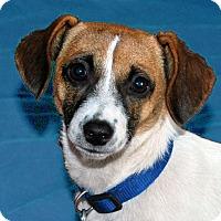 Adopt A Pet :: Nikki - San Francisco, CA