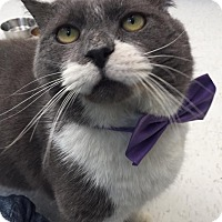 Adopt A Pet :: Hulk - Webster, MA