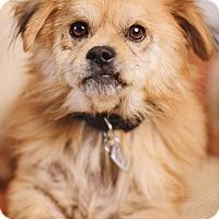Adopt A Pet :: Roberto - Portland, OR