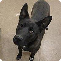 Adopt A Pet :: Polly - Las Vegas, NV