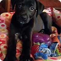 Adopt A Pet :: Coco - Groton, MA
