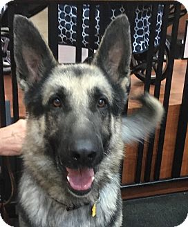 German Shepherd Dog Mix Dog for adoption in Walnut Creek, California - Kane