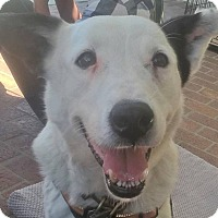 Adopt A Pet :: DAISY (Courtesy List) - San Pedro, CA