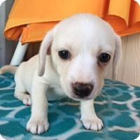 Adopt A Pet :: ALADDIN - Elk Grove, CA