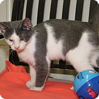 Adopt A Pet :: Olaf (Neutered) - Marietta, OH
