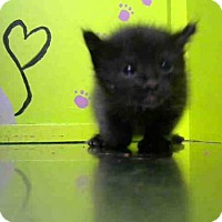 Adopt A Pet :: BAGIRA - Houston, TX