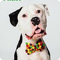 Adopt A Pet :: Pinky - Houston, TX