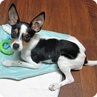 Adopt A Pet :: Breezy - Carlisle, PA