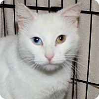 Adopt A Pet :: Snow White - Germantown, MD